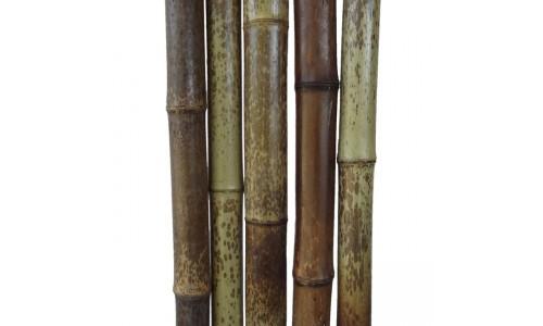 Бамбуковый ствол леопардовый Диаметр ствола 4-5 см, L 3 м купить недорого в Москве
