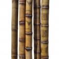 Бамбуковый ствол толстостенный грузинский Диаметр ствола 5-6 см, L 3 м