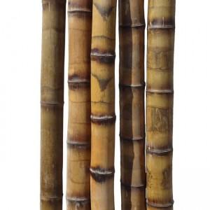 Бамбуковый ствол толстостенный грузинский Диаметр ствола 5-6 см, L 3 м (10 шт.)