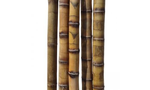 Бамбуковый ствол толстостенный грузинский Диаметр ствола 5-6 см, L 3 м купить недорого в Москве