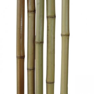 Бамбуковый ствол светлый Диаметр ствола 2,5-3 см, L 4 м (10 шт.)