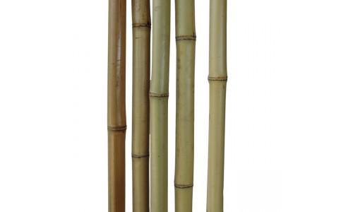 Бамбуковый ствол светлый Диаметр ствола 2-3 см, L 2 м купить недорого в Москве